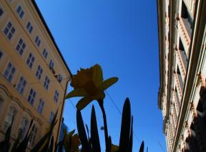 Urban Gardening wird immer beliebter